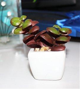 Mini Terrarium Plant  (100% Washable)
