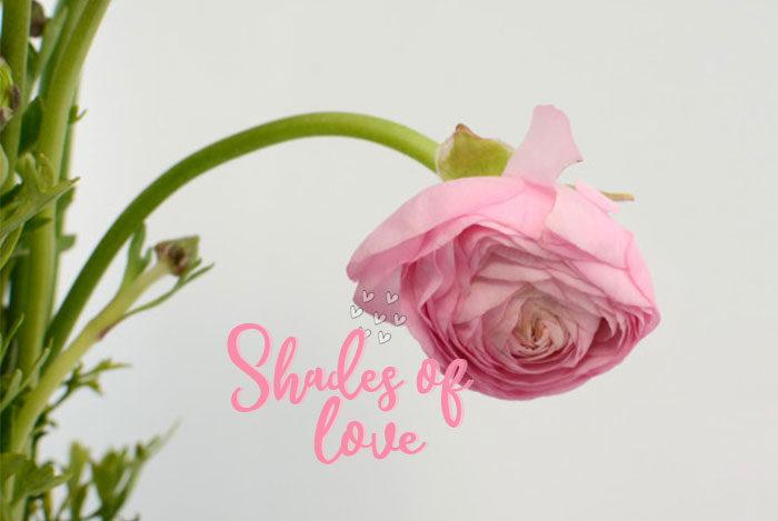 valentine-gift-under-499