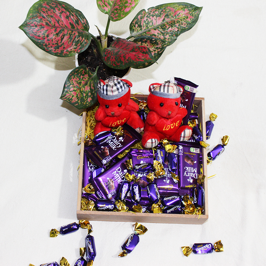 Cuteness of teddy and sweetness of chocolates