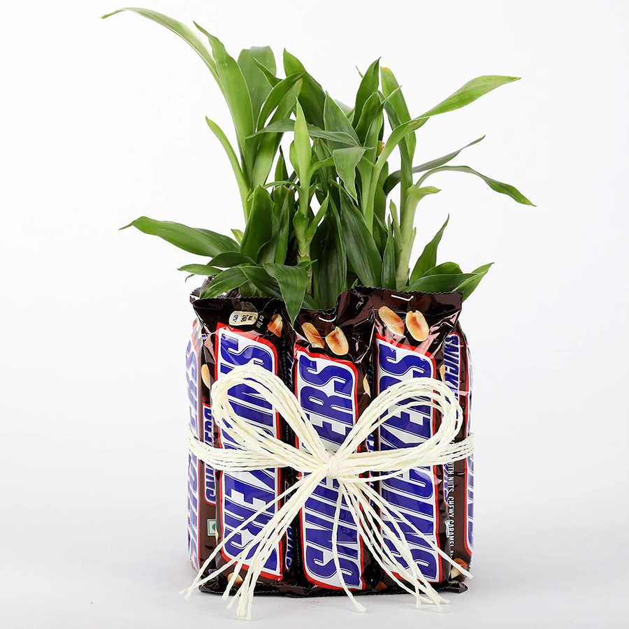 Two Layer Bamboo Plant With  Snickers