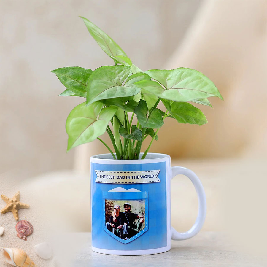Syngonium plant in personalised mug